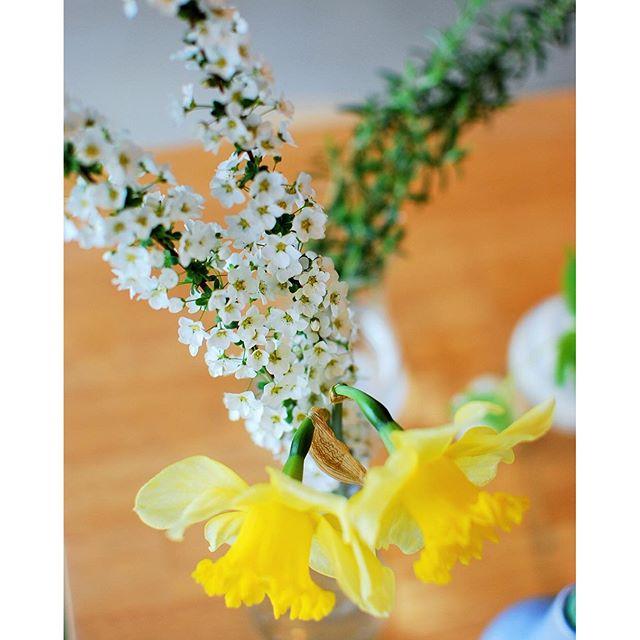 #ユキヤナギ ユキヤナギのこの香りなかなか、しっかりとしています。春はユキヤナギ、あちこちで見かけますよね。ぜひお部屋に飾ってみてください。思いのほか、よく香ります☆#メデルガーデン #春の花#春の花を飾りましょう