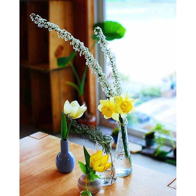 今朝は庭先に咲いた花達を摘んで、花瓶に。生け方はへたくそでも、とりあえず、部屋に花を飾る。不思議と部屋が明るくなります(^ν^)そして気分もぐっと明るくなれます。お部屋もあっと言う間に春の香りに#春の花を飾りましょう#チューリップ#スイセン#ユキヤナギ