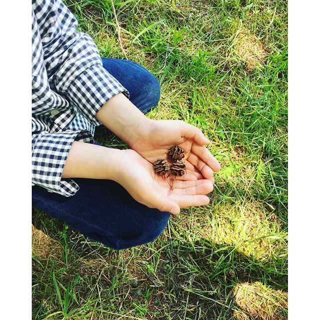 #メタセコイア並木 メタセコイアの木の実はかわいい♡#マキノ高原メタセコイア #光葉園 #メデルガーデン