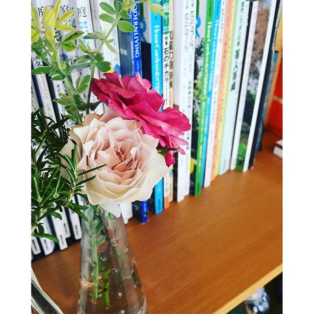 #バラガブリエルバラの季節が到来。ガブリエル、葵ともに咲き始めました。ガブリエルは芳香が強く、こうして花瓶に生けて置いておくと、私の仕事の傍らでずっと香りをふんふん♪届けてくれます。爽やかな柑橘系の香りです。#バラのある暮らし#花瓶にバラをかざりましょ#メデルガーデン#光葉園