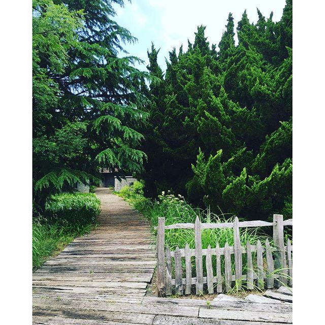 #ローザンベリー多和田 右の木がなんだか怖いってお友達が言いました。そう言われてみれば、なんだか。怒ってるみたいです。植物大好きな方々と一緒にメデルガーデンワークショップの郊外学習へ、ローザンベリー多和田さんを訪ねました。目を沢山肥やして、沢山のステキを吸収できたかと思います。またすぐ行きたいなぁ。#メデルガーデン