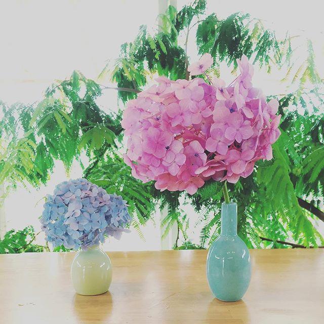 #アジサイの季節庭のアジサイが綺麗に咲いています。紫陽花は花期が長く楽しめるので、庭にひとつ植えておくと、この梅雨の季節に切り花として重宝しますね。アジサイは屋敷の庭植えにはよくないとか、いろんな迷信もあるとかないとかですが。。。 切り花を長持ちさせるコツのひとつとして、 雨の日に摘む。 雨がりの早朝に摘んで水に挿す。そうすれば長いこと楽しめますよ。そしてこの、個体差にもびっくり。ひとつの木からなのです。まるで、親子みたいなアジサイの花です。#前栽の花#アジサイのパステルカラーが好き#梅雨の季節の楽しみ#梅雨の季節の植物達#メデルガーデン #光葉園