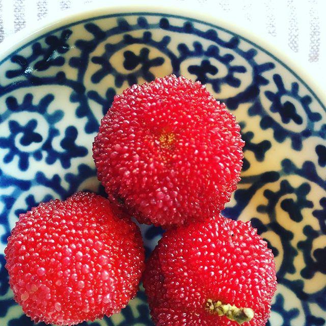 #旬の果実#ヤマモモの実#Mirikarubra今が旬の果実、ヤマモモです。 懐かしんだなこれが☆近くの道の駅 #マーガレットステーションでみつけました。ところで、ヤマモモの木は常緑高木樹として、街路樹や、公園などに植えられています。細長い光沢のある葉、どっしりとした幹が魅力。そして、この美しい宝石のような果実を実らせるのは雌木です。雄木、雌木がある木です。#実のなる木#6月の果実#常緑高木樹#メデルガーデン#光葉園