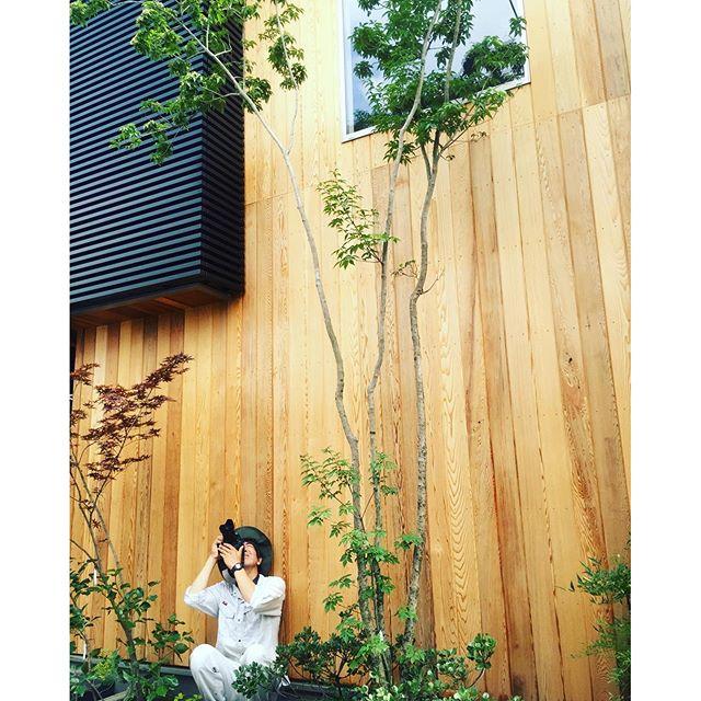 #メデルガーデン #光葉園 新しいお庭、坪庭が完成しましたので、撮影に行ってまいりました。#アオダモ#庭づくり#植栽#雑木の庭#バードウォッチングができる庭