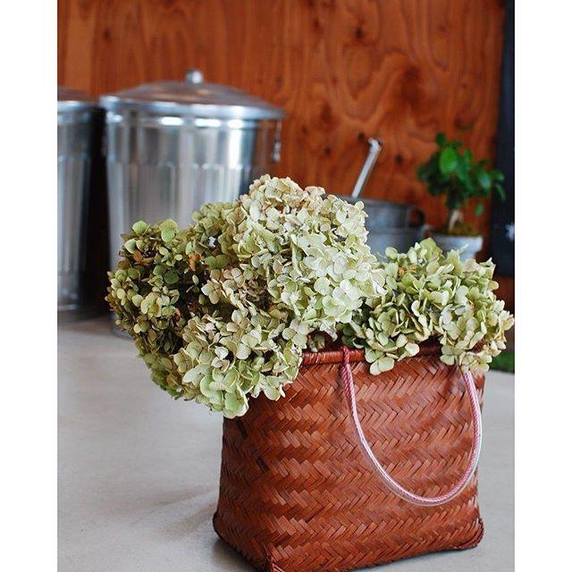#アジサイのドライフラワー今年はうまくできました★晴れた日が続いた頃の夕暮れに。すでに乾燥し始めているアジサイの花を切り取り室内で陰干ししました。この季節、花芽が出てくる前にざっくりとアジサイの枝を剪定してあげると来年また沢山のアジサイの花を楽しめます。お気に入りの買い物籠は#マーガレットステーション で買ったもの。いつものお買い物に重宝しています。でも暫くはアジサイのドライを入れて楽しみます。#アジサイの楽しみ方#光葉園 #メデルガーデン