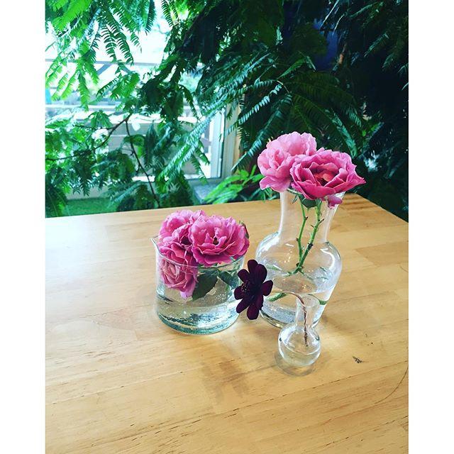 #梅雨の季節の植物達 #7月の花#和バラ昨日の土砂降り、気持ちがよかったなぁ。今日はもくもく曇り空。曇りの日の灰色の空も、好きです。紫外線気にせずに、庭へ出て、雨にたっぷりあたった植物を見つめたり、花摘みをするのが、曇りの日の優雅な時間だったりします。和バラの葵がまた咲き始めました。#チョコレートコスモス も咲き始めています。#雨の日は花を飾ろう #雨あがりの庭から#花のある暮らし#メデルガーデン #光葉園
