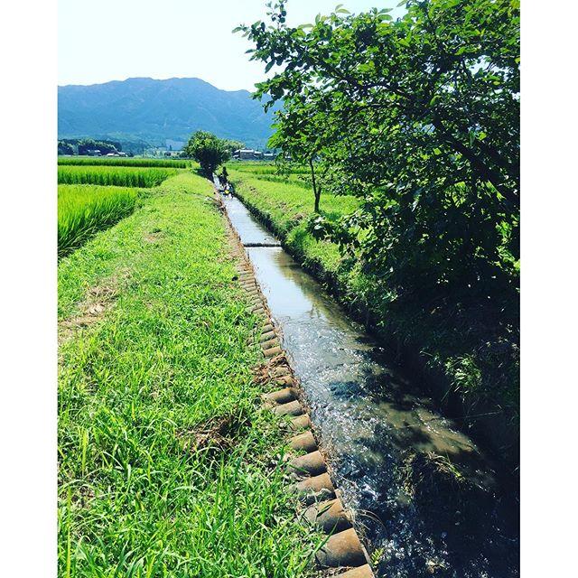 #滋賀の風景 #夏休み #生き物調査毎年恒例の生き物調査でした。田んぼの近くを流れる川へ入り、どんな生き物がいるのかな!?と子供達が先頭をきって調査します。暑さも気にならないくらい子供達は調査に夢中。親心としては、子供達のこういう姿を見ていたいものです。しかし、私はまたもや暑さにやられて、やっぱり熱中症。みなさんもこの暑さ、お気をつけくださいまし。
