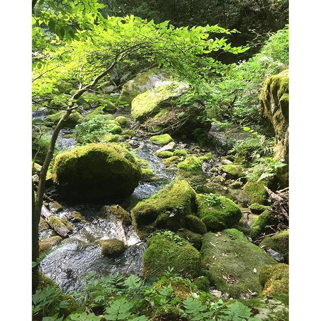 河内の風穴へ。穴までの道程にはこんな素晴らしい山の景色。#滋賀県 #多賀#夏休みの過ごし方 #滋賀県の避暑地#滋賀っていいでしょ