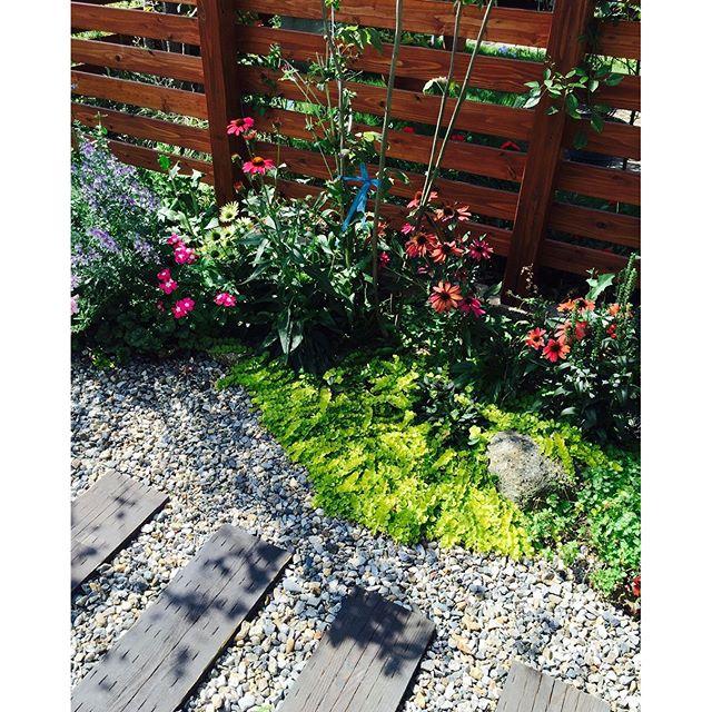 #ナチュラルガーデン今年は雨が少なくて、この夏は水遣り毎日毎日大変でした。先日訪れてきました。この春完成したお施主さんのお庭です。水遣りを欠かさずにお庭を愛でてくださっていました。嬉しいことです。#リシマキアヌンムラリアオーレア#メデルガーデン #光葉園