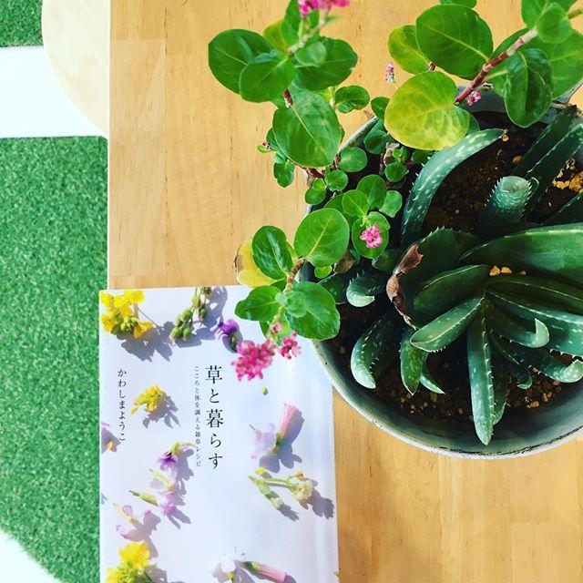 #草が好きになる本#おすすめ本 またまた#かわしまようこさんの本雑草レシピも興味深い内容です。春も素敵ですが、秋の草、雑草もまた風情があって大好きです。写真はアロエのそばにこぼれ種で生えた#タデアイ#メデルガーデン #雑草たちが美しい季節秋 #光葉園