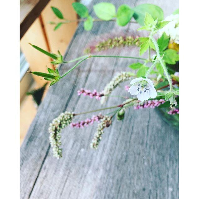 #ゲンノショウコずっとシロヘビイチゴの花だとおもっていたけれど、やっぱり違ったのでした。訂正いたします。ゲンノショウコフウロウソウ科フウロウ属滋賀県の伊吹山や、東京の高尾山などで見られるみたいです。私は滋賀の東近江市の田んぼの草わらで見つけました。#秋の野の草#秋の雑草 #メデルガーデン #光葉園 下痢止めなどにも重宝された薬草なんですって。食べるとたちまち効いたから『現の証拠』というわけでこの名前。