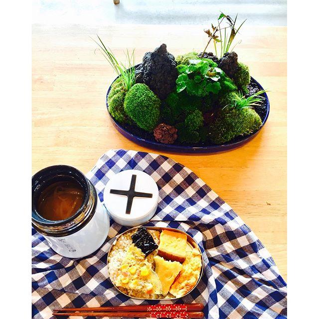 #盆景 #お弁当#苔を眺めながらのランチタイム。こんな時間が大切。#光葉園 #メデルガーデン 今日のお弁当は#さつまいも#だし巻き#ひき肉とコーンとタマネギのオムレツ#発芽玄米キヌア入り#もやしの味噌汁気がつけば黄色いものばかり。