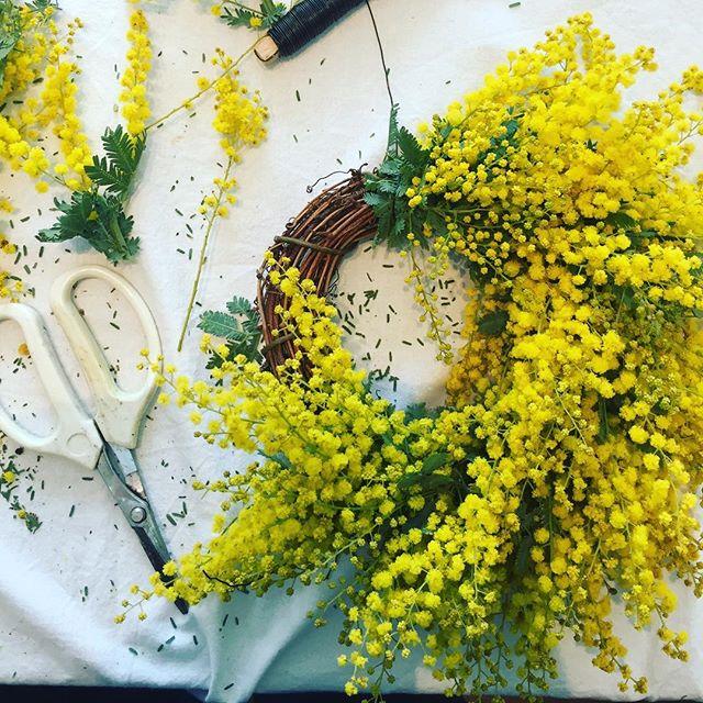 #ミモザリース ひと足お先に春を感じること、楽しんで参りました。ミモザでつくるリースは#mûre ちゃんのお花のお教室。そして8人のステキな皆さんと黄色いお声でお喋りは弾みました笑。#ミモザ#mimosa #お稽古#光葉園 #メデルガーデン