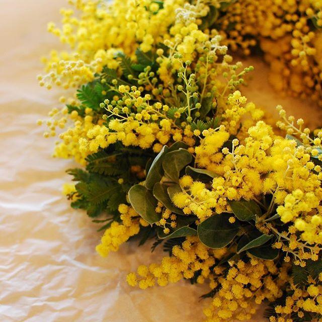 #mimosa#wreath 先日#mure さんに教わったmimosaのwreathの作り方を忘れないでおきたくて。再チャレンジしてみました。#愛東マーガレットステーション でミモザを調達、葉の形が違う2種類のミモザを使いました。昨日は春一番、そして今日も北風ぴーぷーと寒い一日になりそうですが、ミモザイエローで気分は少しずつ春の気分です。#メデルガーデン #こうようえん