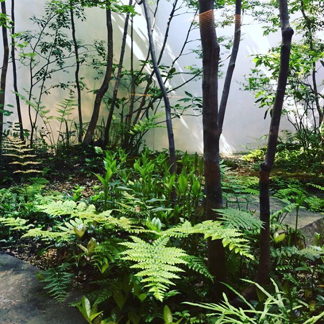 #雑木の庭 #京都旅ずっと憧れている造園家の荻野寿也さんが手掛けられた庭を愛でて参りました。#新緑#ホテルの中庭#京都#雑木