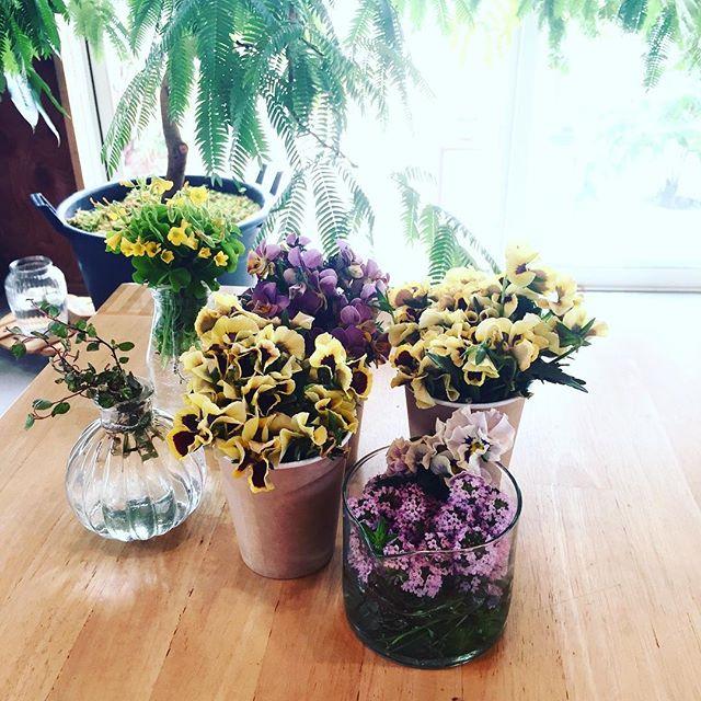 #Viola 花盛りの今日この頃ですが、そろそろビオラ達をばっさりと切りました。茎が伸びてきたら花がたっぷり咲いていてもばっさりと剪定してあげると、しばらくすると切った先から芽吹き花がまた楽しめます。もうワンチャンス☆追肥もお忘れなく。それから、切りとった花達はもちろん、お部屋の中で楽しみます。そんな事をアフターガーデニングというそうです︎除草のために引っこ抜いたカタバミも黄色い小花が可愛らしいから一緒に。ピンク色の花が咲いているタイムも咲き終わったらばっさりといかなくちゃね。#お花のお手入れ#切り戻し#アフターガーデニング#メデルガーデン #こうようえん