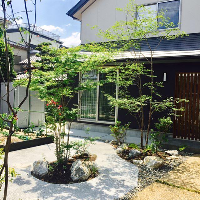 #家庭菜園のある庭家庭菜園のある、落葉樹の木漏れ日が心地よいお庭を撮影しに行きました。ジューンベリーが色づき始めていました。#草津市で庭づくり#家庭菜園#雑木の庭#メデルガーデン #こうようえん #光葉園