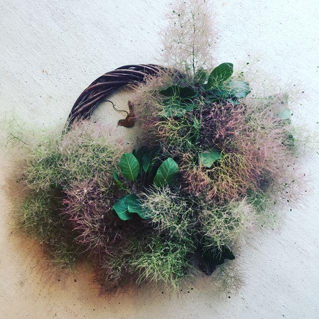 #スモークツリーリースもくもくと煙るように咲くスモークツリーの季節がやってきましたよ。wreatheにしてみました。少し足りなくて、アイアンの小鳥でカモフラージュ。#wreathe#Cotinuscoggygria#6月の花木#季節の花