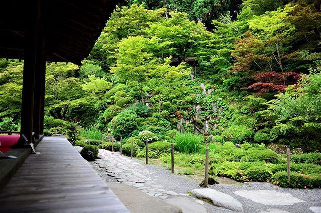 #金剛輪寺 お庭の池には蓮の花が咲いていました。#湖東三山#梅雨の季節の楽しみ#滋賀の素敵な場所#池泉回遊式庭園