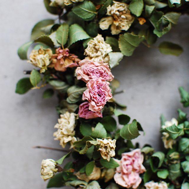 #私の育てたミニバラwreathe暑い夏にもかかわらず強健に咲いてくれる、ミニバラのグリーンアイス。咲いては切り取り集めてこつこつ。グリーンアイスのwreathe作りました。いびつな形もなお愛おしい#メデルガーデン#秋のwreathe #ミニバラ #ドライフラワー#アフターガーデニング#光葉園