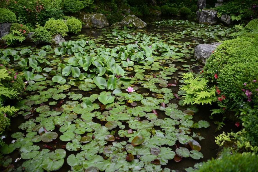 蓮 金剛輪寺の庭