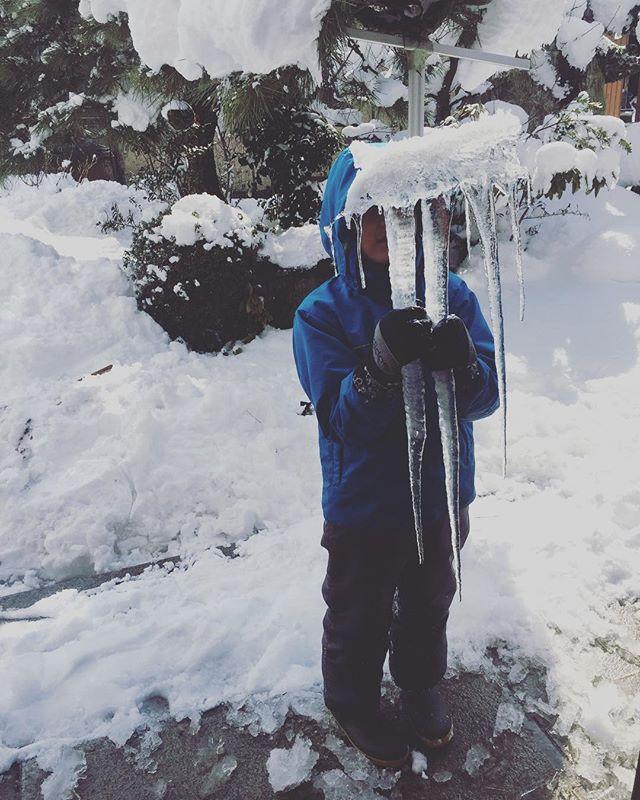 #つららおかーあーさーん、ちょっときてーって言うので、玄関へ急ぐと☃️大きなつららゲットだぜー♡#雪の日#大雪の日#家で巣篭もり#子供達は楽しそう#東近江市