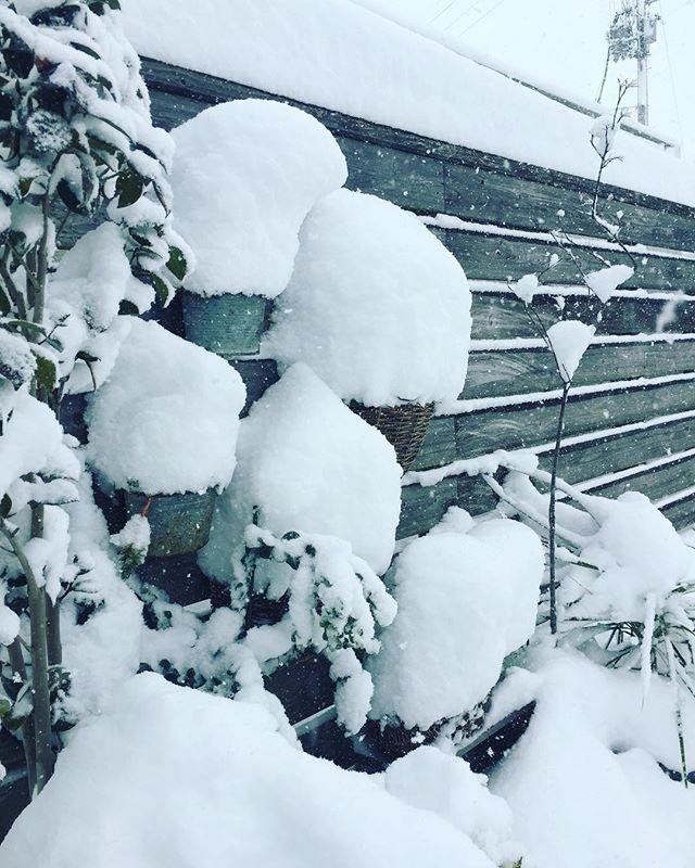 #雪の日一晩でたくさん積もっちゃいました。まだまだ降り続けています。車の運転気をつけましょー☃️ #東近江市#滋賀県#光葉園#メデルガーデン