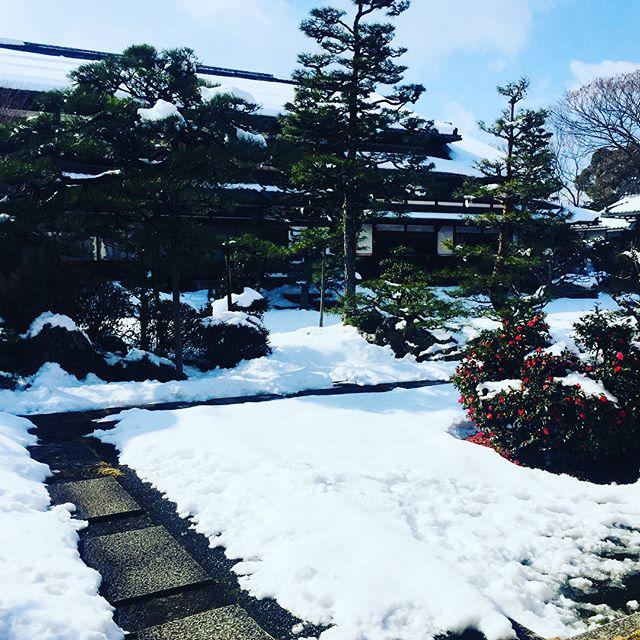 #雪景色最近少し日本酒の魅力がわかるようになってまいりまして、今が旬のにごり酒を求めて、藤井本家さんへ行きました。#旭日#おつかいもの#滋賀県は蔵元がいっぱい#パ酒ポート買わなくちゃ#にごり酒 #しぼりたてという素敵なことばに弱いのです。#滋賀県のお酒