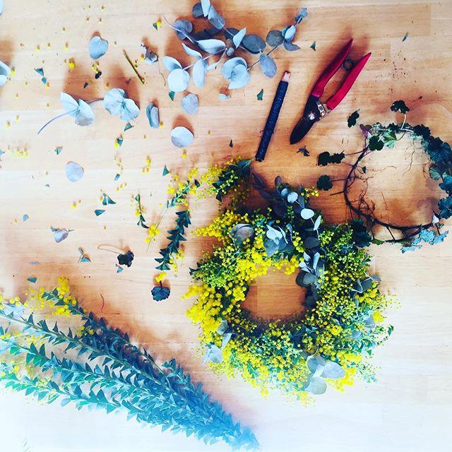 #ミモザリース 大切な人への贈り物、ミモザのリース♡喜んでもらえますように。。。まだまだへたくそだけれど、愛をこめて#ミモザ#ユーカリ#土台はルブスカルシノイデス#春#メデルガーデン#アフターガーデニング#