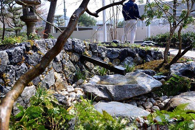 #水やり水やりの季節到来です。思うよりたっぷりと水をあげてくださいね。先日完成した、日本庭園の蹲#蹲#多賀鉱石#日本庭園#光葉園#メデルガーデン