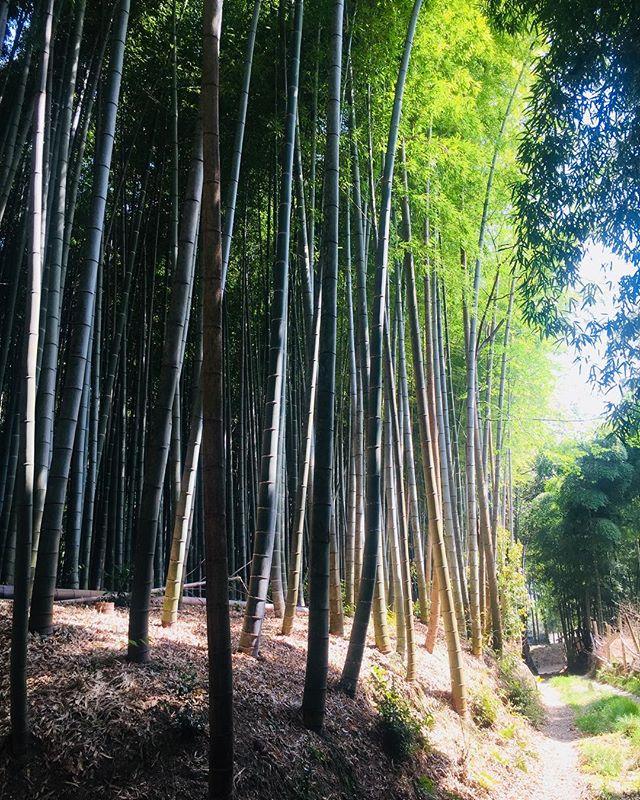 #筍掘り初のたけのこ掘りに挑戦してきました。#たけのこの季節#長岡京市はたけのこの里#京都旅#春の京都