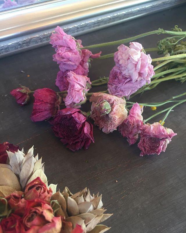 #ラナンキュラス春の花が続々と咲き、わくわくドキドキな春の日々。咲き誇った花は早めに摘み取り、花びんにさして部屋で楽しんで、それからそれから、逆さに吊るしてドライフラワー#ピンク#ドライフラワー#アフターガーデニング#メデルガーデン