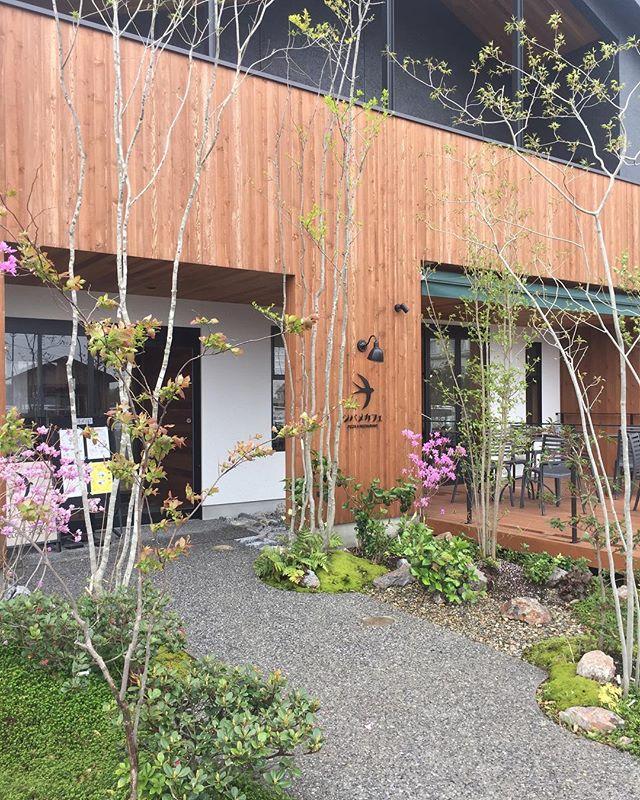#植栽メンテナンス今朝は以前植栽をさせていただいた、カフェレストランの植栽メンテナンスへ。お店のスタッフさんに愛でられ、訪れたお客さんにも愛でられた庭はすくすく成長してくれています。#店舗植栽#雑木の庭#メンテナンス#造園#メデルガーデン#光葉園