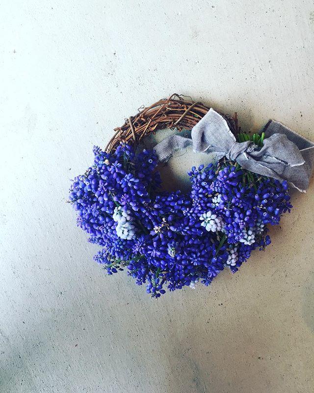 #ムスカリのリース春の剪定第二弾。ムスカリも思い切ってばっさりと。もったいないので、リースにしてみました。#ムスカリ#wreathe#ムスカリブルー#アフターガーデニング#花あそび#春の花#メデルガーデン#光葉園