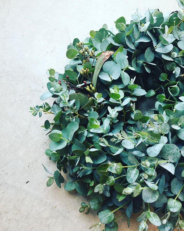 #ユーカリ弟君の結婚式で沢山頂いてきたユーカリで、リースを作りました。ユーカリっていい色♡そして、いい香り♡#wreathe #eucalyptus#mederugarden