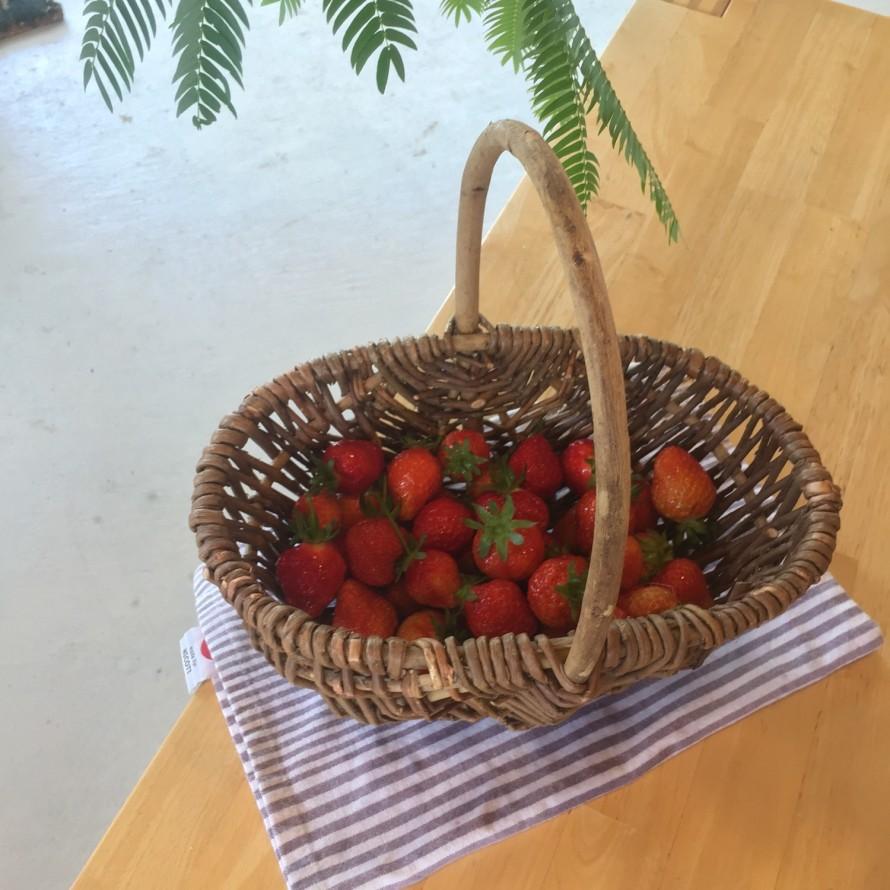 メデルガーデンで育てたイチゴ