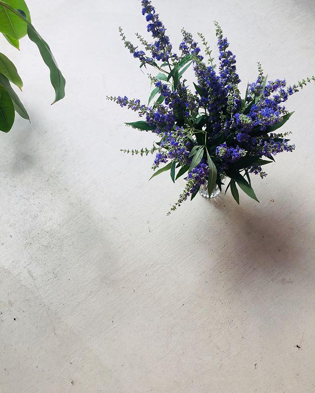 #セイヨウニンジンボク 今が旬のセイヨウニンジンボク、私も好きです♡#july#7月の花#メデルガーデン