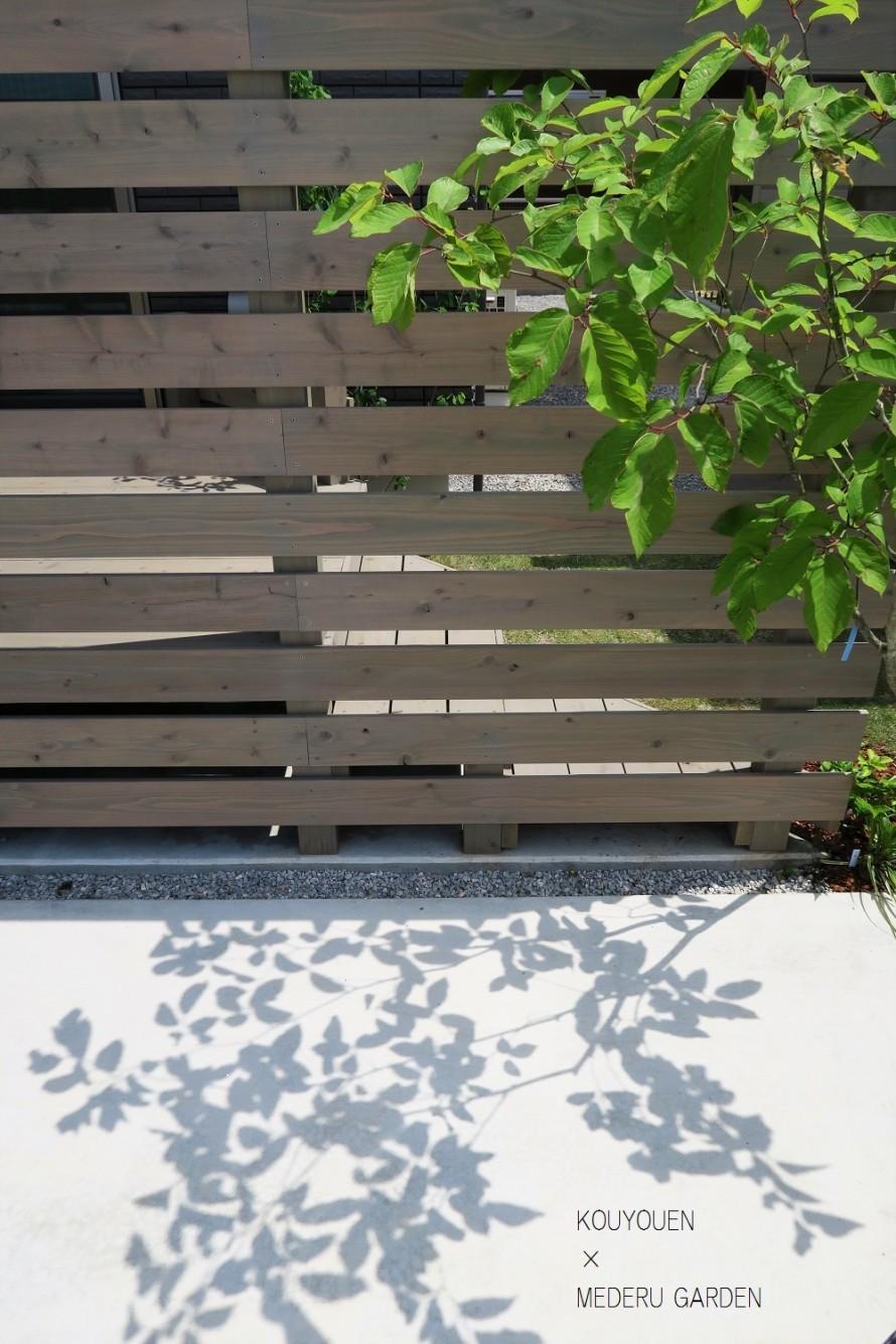 シラキの影とウッドフェンス