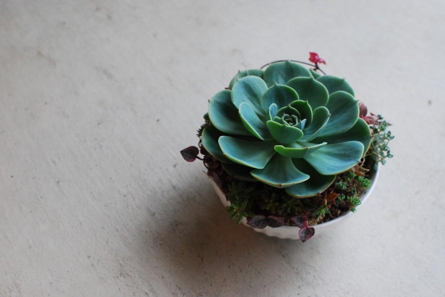 多肉植物の小さな寄せ植えアンティークな器 (1)
