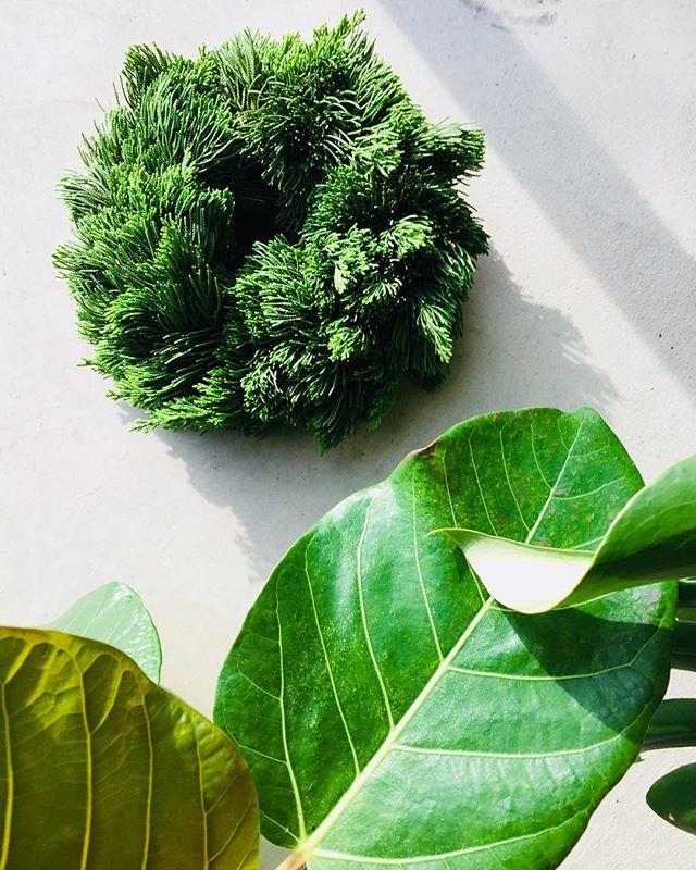 #green良い季節、3時になるとうとうととしてしまいます。眠気覚しにひとつ、グリーングリーンなwreatheを作りました。指に刺さるトゲのような葉がまた、眠気を覚ましてくれました。#剪定後の楽しみ#アフターガーデニング#針葉樹#イブキ#光葉園