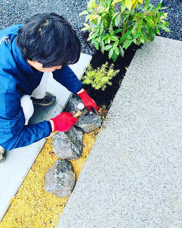 #造園あと少しで庭、完成します。目地に石を据えて、石の間に球根を仕込みました。春が待ち遠しい#庭造り#近江石#ウエストリンギア#レモンマートル#光葉園