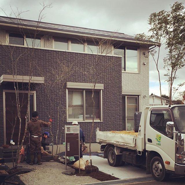#植栽工植栽工事でした。もうすぐ完成します。#庭造り#造園#アオダモ#シマトネリコ