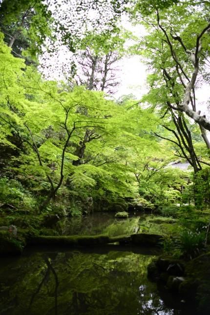 新緑の6月 金剛輪寺