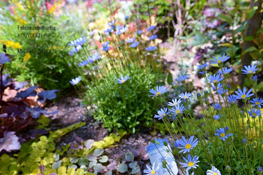 宿根草やグランドカバーで緑の潤い 5月