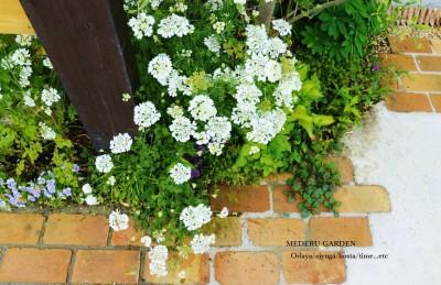 春の門柱花壇 Spring