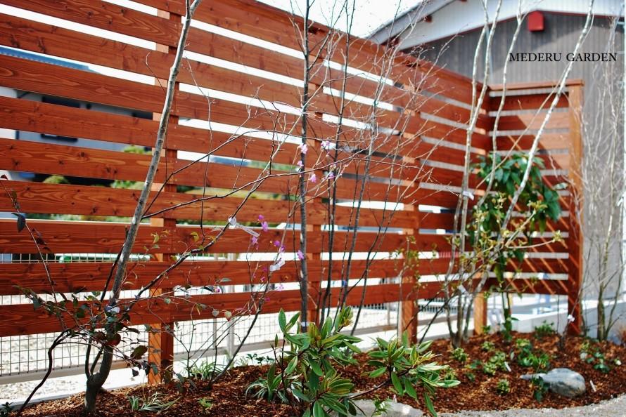ヤマモミジ・ヒメシャラ・サワフタギ・アオダモなどの雑木を植栽しています