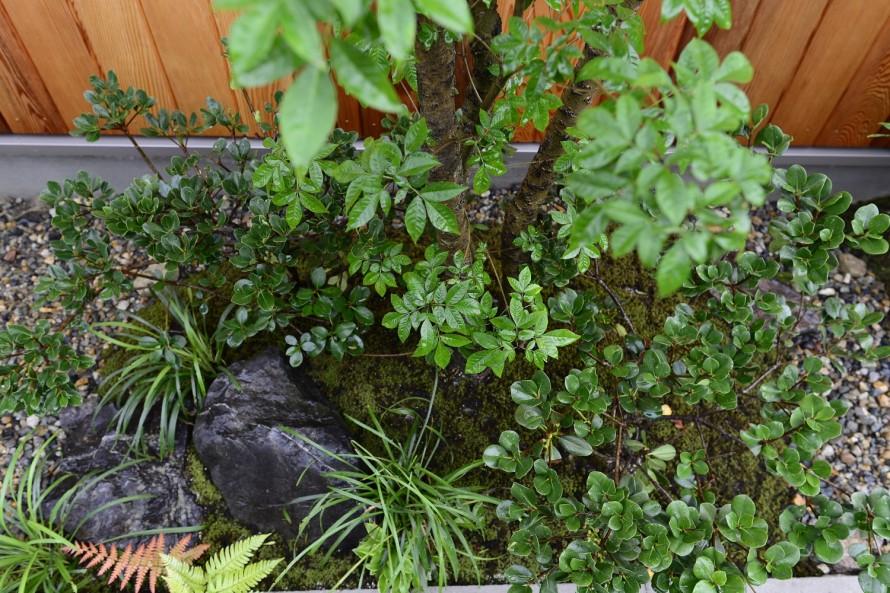 雑木の下の低木と下草たち