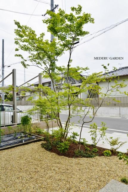 モミジシンボルツリーの雑木の寄せ植え