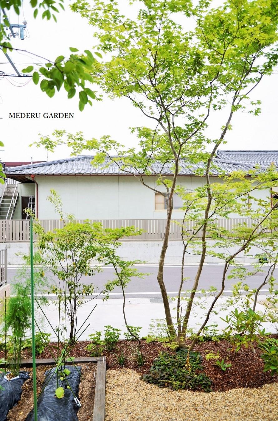 雑木と家庭菜園