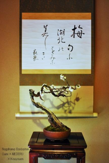 俳句と盆梅